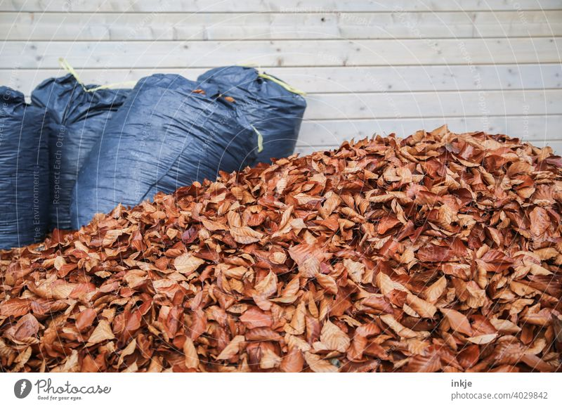 spring cleaning Colour photo Exterior shot Deserted heap of leaves Autumn Spring Gardening foliage withered refuse sacks Brown Blue Copy Space Nature
