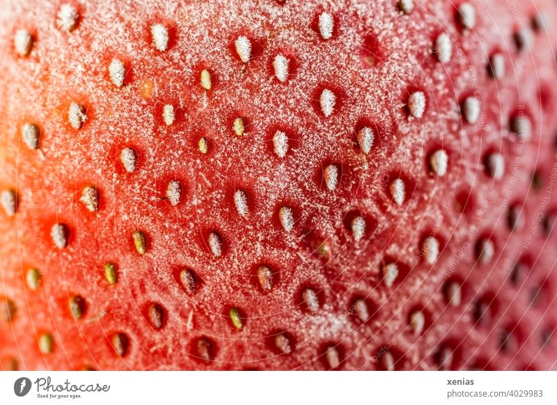 Macro image of a frozen red strawberry with its nutlets on the frosted surface aggregate fruit Fruit Food Red Nutrition Vegetarian diet Close-up cute Frozen