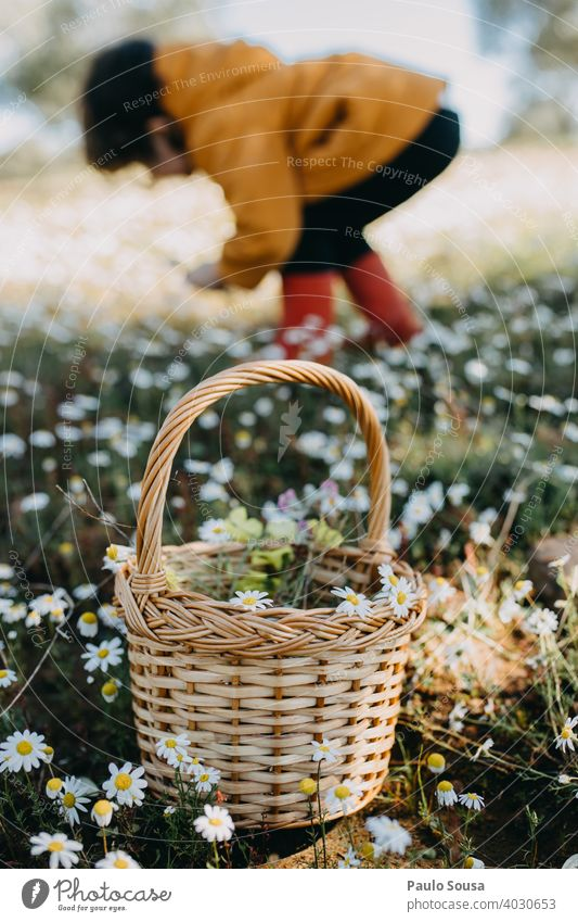 Child picking spring flowers Basket Spring Spring fever Spring flower Flower Plant Nature Colour photo Blossom Blossoming Exterior shot Day Spring day Garden