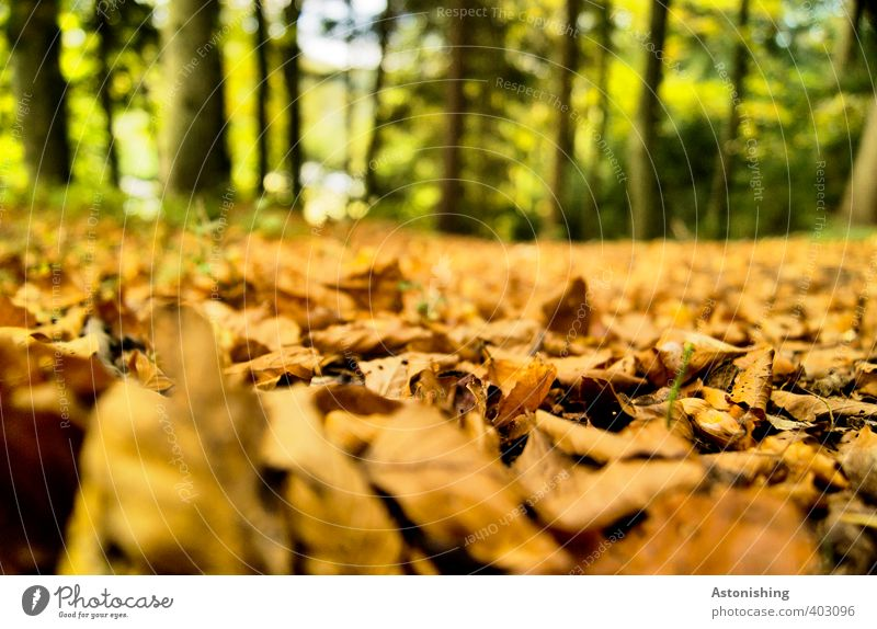 Nature Green Plant Tree Landscape Leaf Forest Environment Autumn Wood Brown Lie Orange Weather Earth Beautiful weather