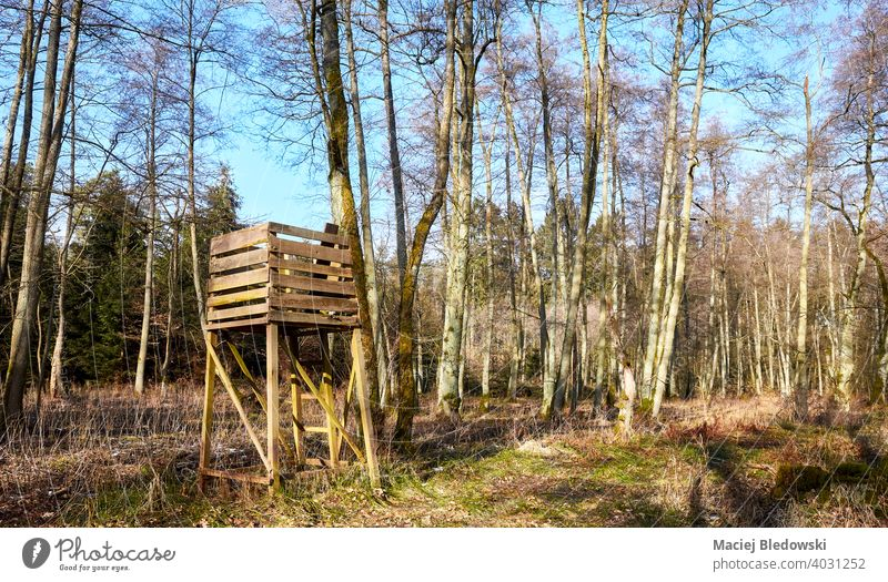 Open top hunting blind in forest. pulpit stand open wooden landscape tree nature scenery hide no people season