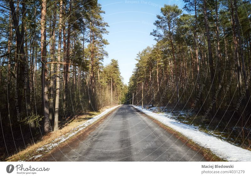 Asphalt road in forest on a sunny winter day. asphalt drive trip journey travel woods landscape snow tree season way weather nature scenic
