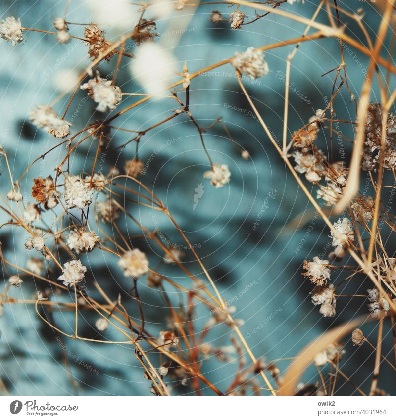 dust catcher Pot plant Bushes Plant dry plant Fragile Many Blade of grass Dry Thin Blossom To dry up Decoration Close-up Detail Colour photo Interior shot