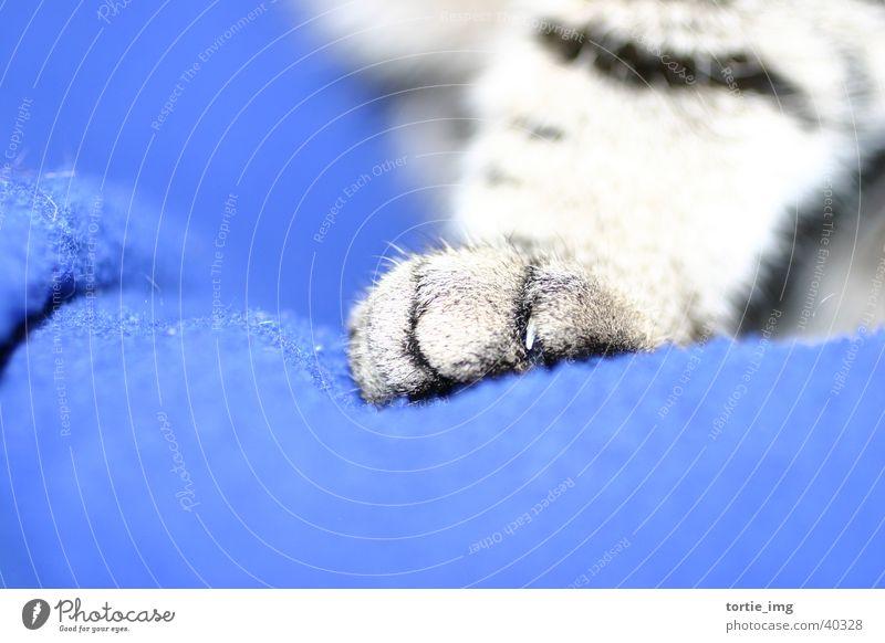 Animal Cat Paw Pet Claw