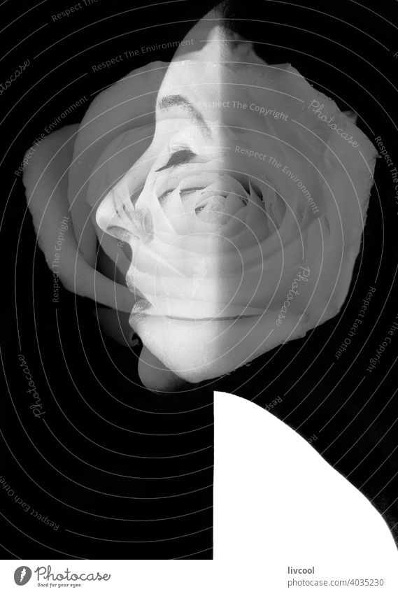 black and white female profile with merged white rose portrait beautiful flower performance fusioned lovely cute femenine double exposure allure arty dark