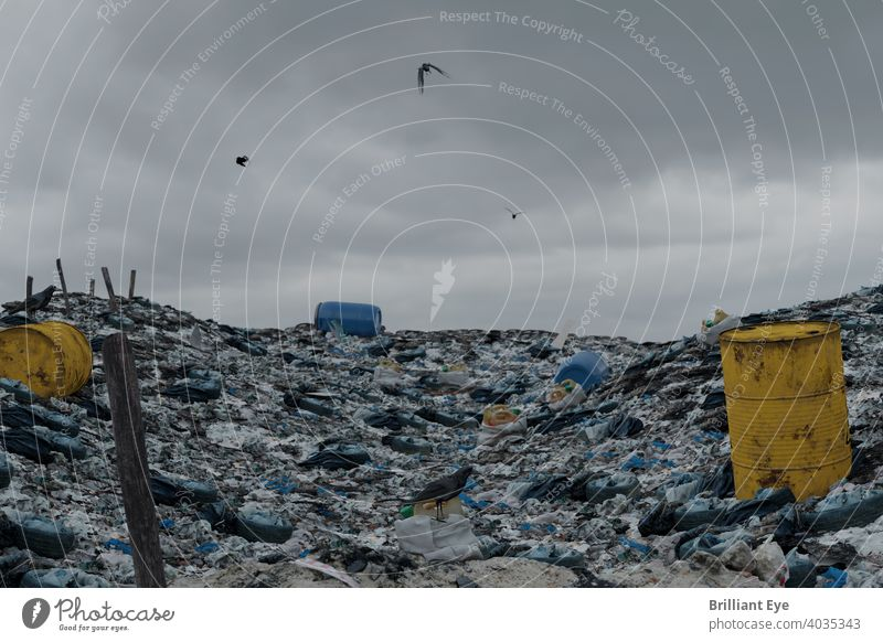 flying crows over a huge pile of garbage in search of food barrel Harm Old polluting waste Chaos Untidy impurity Unhygienic Crow Rubbish heap background