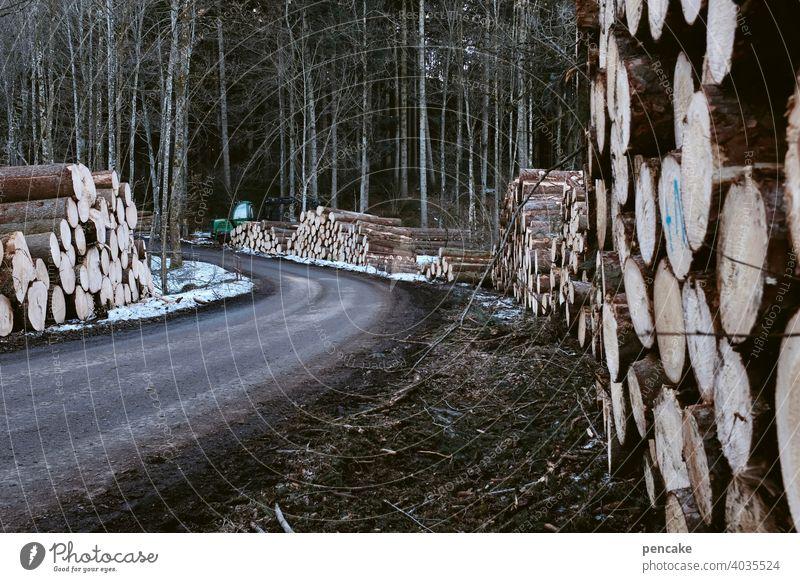 baumallee Baumstämme Wald Schnee Schneeschmelze Frühling liegen Stapel Baumstapel Holz Holzstapel Schneereste Weg Straße Forstweg Landschaft