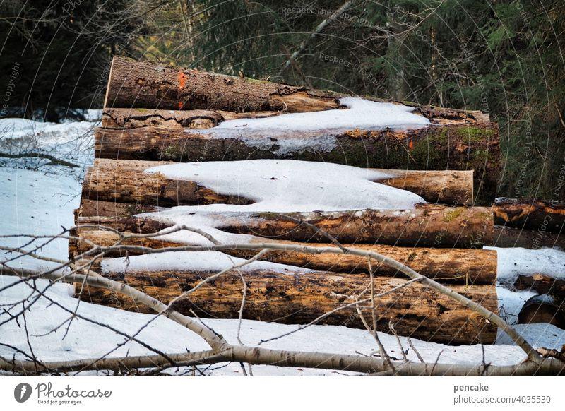 resterampe Baumstämme Wald Schnee Schneeschmelze Frühling liegen Stapel Baumstapel Holz Holzstapel Schneereste