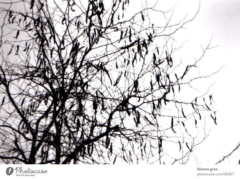 hang out Tree Leaf Clouds Twig Sky Emotions