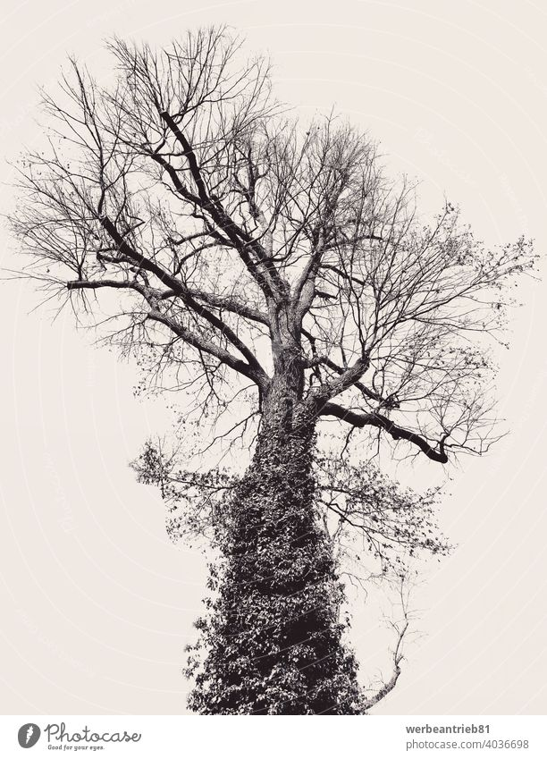 Black and artful big tree on beige background black isolated nature growth artwork abstract creative different design artistic concept digital contemporary