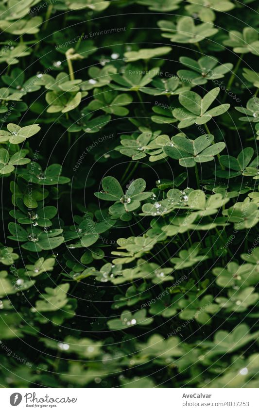 A background of a group of green flowers with water drops and strong shadows during spring plant nature bloom blossom beauty season beautiful petal fresh