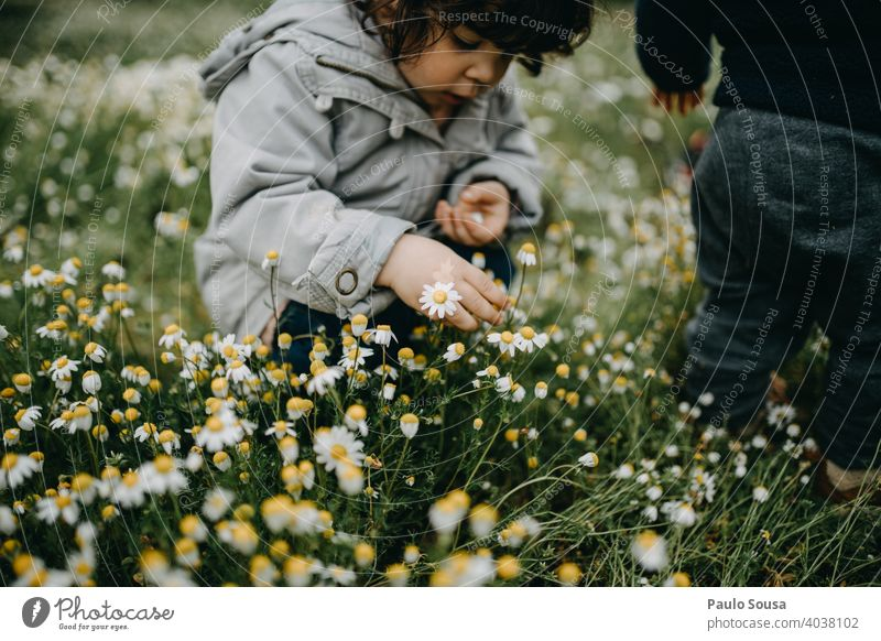 Child picking spring flowers Daisy daisies Spring Spring fever Spring flower childhood Flower Nature Plant Blossom Grass Blossoming Colour photo Beautiful Green