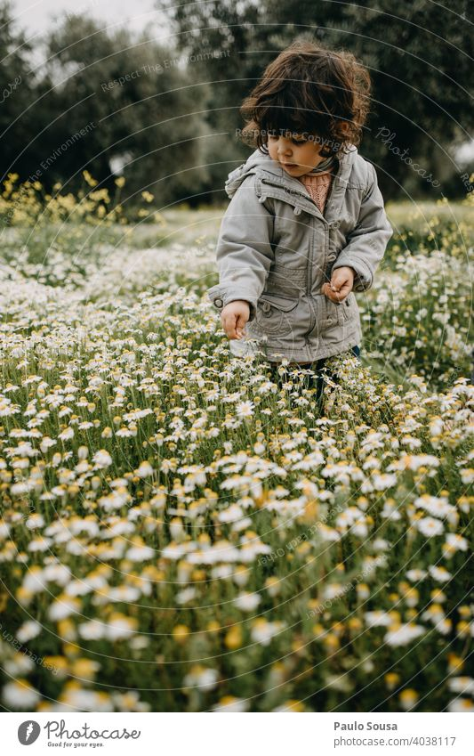 Child picking spring flowers Daisy daisy meadow Spring Spring flower Caucasian 1 - 3 years Meadow Flower Summer Grass Nature Green Blossom Plant Flower meadow