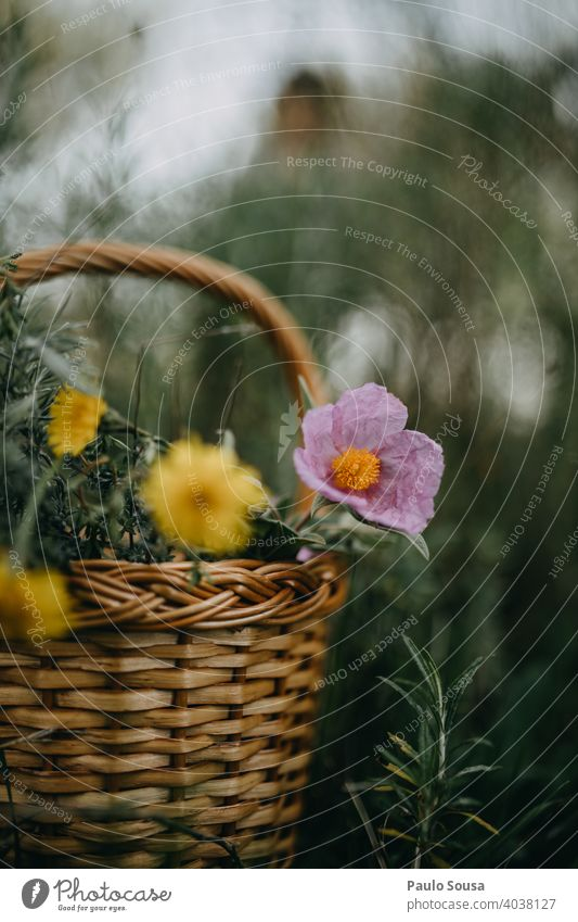 Basket with wild spring flowers Spring Spring flower Spring flowering plant Spring fever Nature Colour photo Flower Plant Exterior shot Blossom Day Spring day