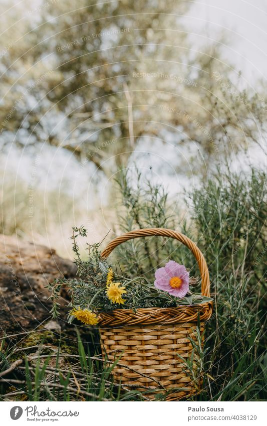 Basket with wild spring flowers Copy Space top Colour photo Spring Spring flower Spring fever Spring flowering plant Flower Plant Nature Blossom Exterior shot