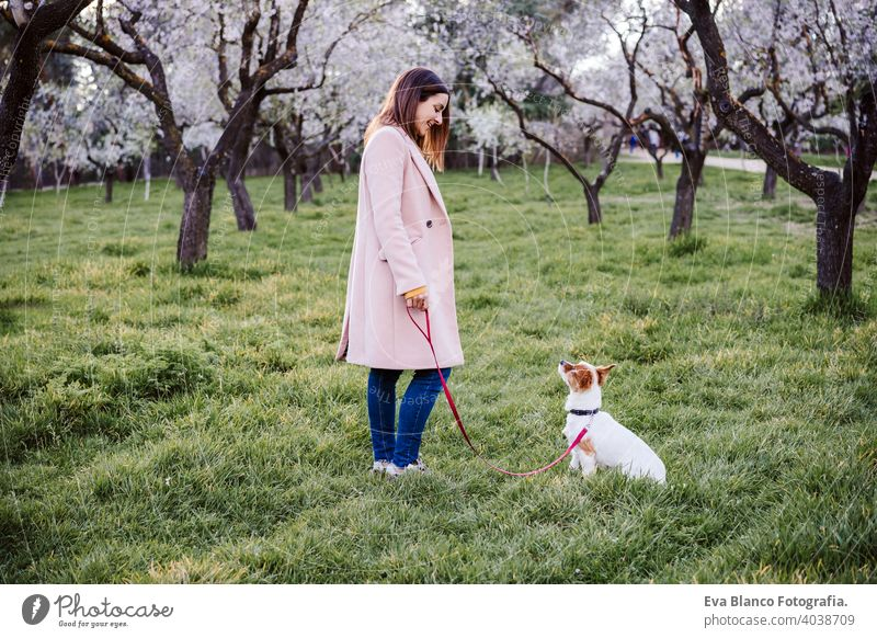 caucasian woman and dog in park in springtime at sunset. Love and friendship concept. pets outdoors jack russell park spring flowers together togetherness owner