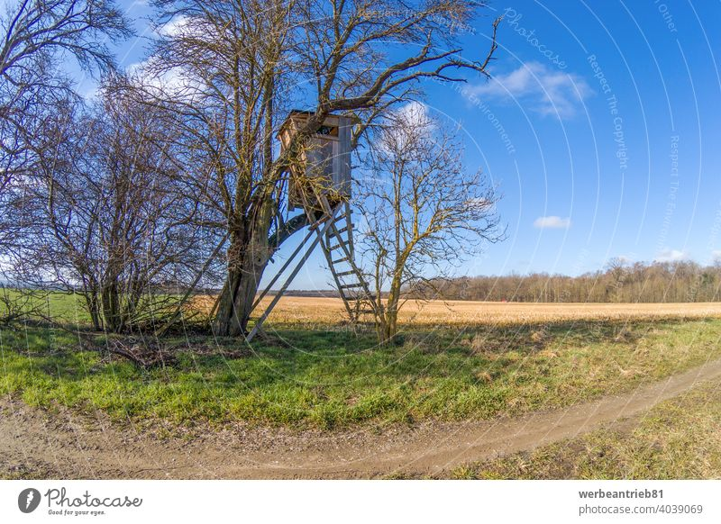Typical German hunter seat hidden in the undergrowth hunters seat hunting deer hunt hideout insidious sunny blue sky field farm road path way winter observing
