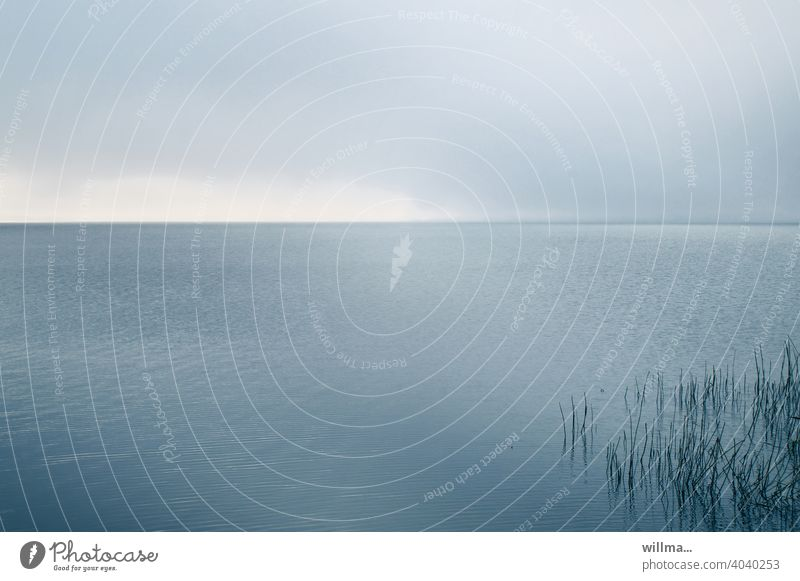 At the Bodden Water reed Baltic Sea Usedom silent Calm Relaxation Lake Ocean meditation Nature Horizon Colour photo Gray Copy Space