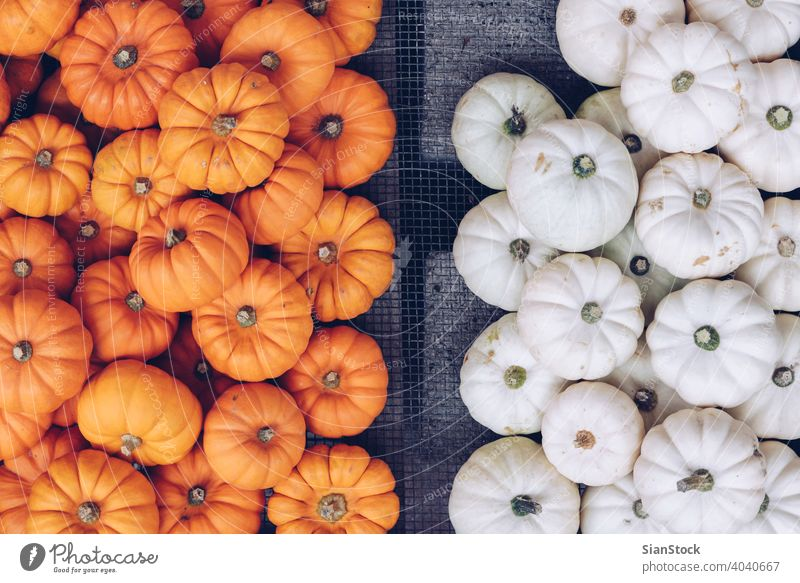 Many orange and white pumpkins in a basket at the street. Halloween concept. autumn squash halloween shop top view jack Flat lay thanksgiving fall nature