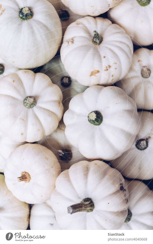 Many white pumpkins Halloween concept. autumn halloween thanksgiving fall nature natural Flat lay background isolated harvest squash november winter plant pale