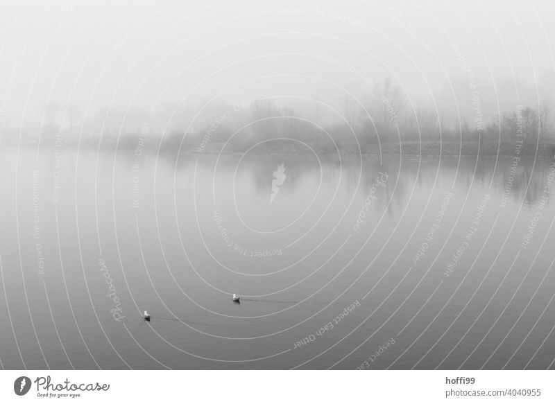 Two seagulls on the water in a foggy landscape Fog Cloud forest Patch of fog Fog bank Sea of fog Gloomy Loneliness Wet minimalism Lakeside Winter Spring Cold