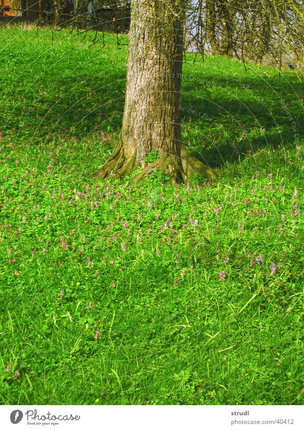Tree Flower Green Meadow Grass Spring Tree trunk