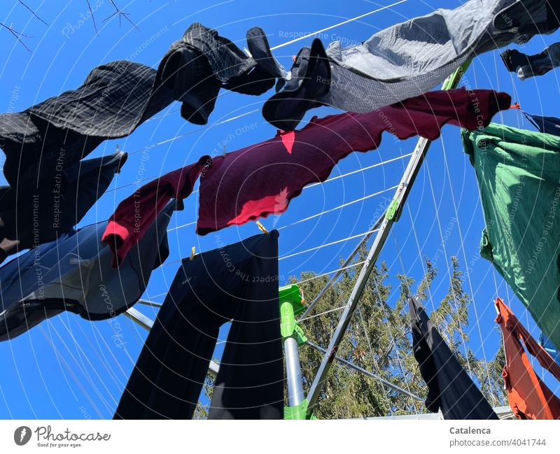Laundry blowing on the clothesline in the fresh spring breeze under a deep blue sky rotary clothes dryer Sky Fir tree Tree Plant Shirt T-shirt Pants clothespin