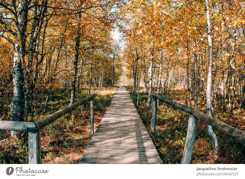 Red moor in autumn, Rhön, Germany red mire Fen Bog Autumn autumn colours wooden walkway Plank Path UNESCO Biosphere Reserve Nature reserve nature conservation