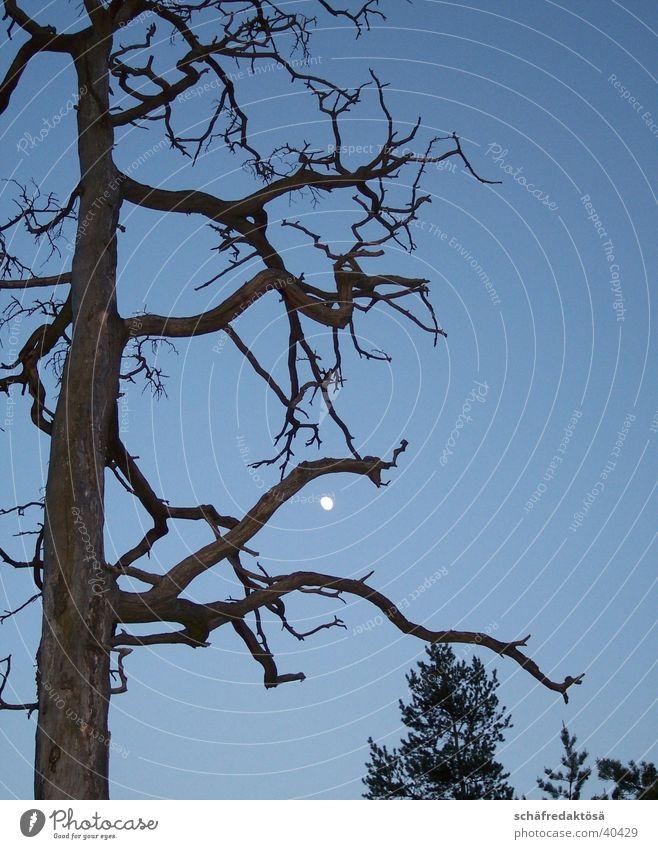 mysticism Mystic Tree Full  moon Twilight Branch Moon