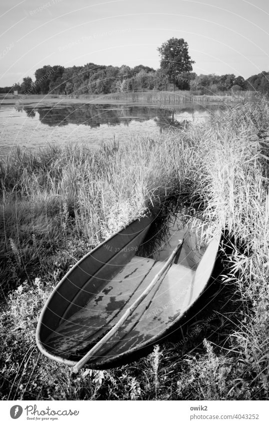 sloop Fishing boat Motor barge Metal Simple Fishpond Illuminate Idyll Far-off places Glittering Germany Lausitz forest Lake Lakeside Bushes Grass Tree