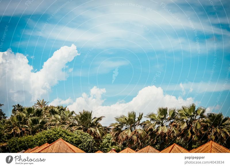 Parasols under palm trees Palm frond Palm beach palms Palm roof parasols Sunshade sun protection Exterior shot Palm tree Colour photo Vacation & Travel Deserted