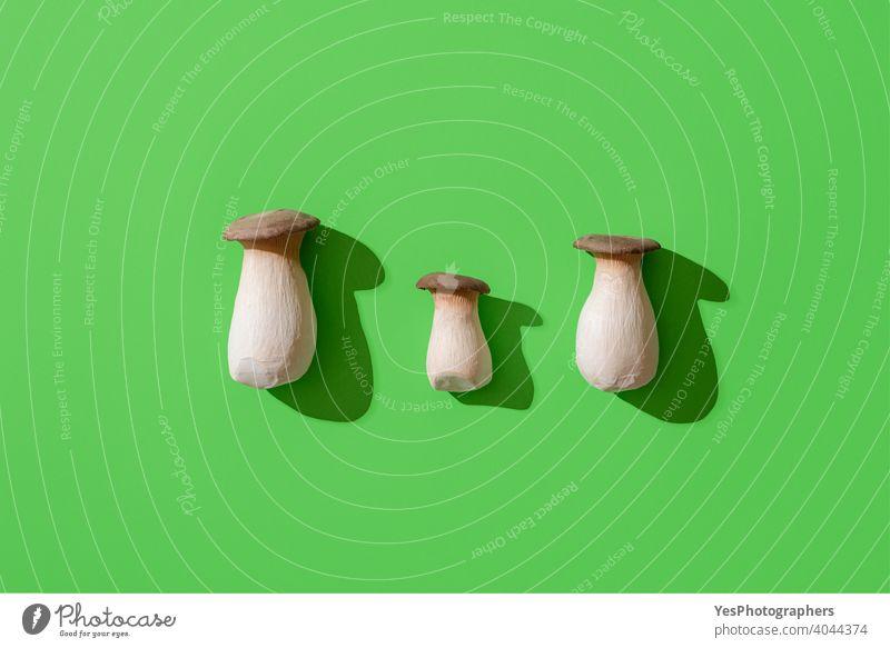 Boletus edulis mushroom on green background, top view. Edible wild mushrooms, minimalist above view aligned autumn bolete boletus boletus edulis bright cep