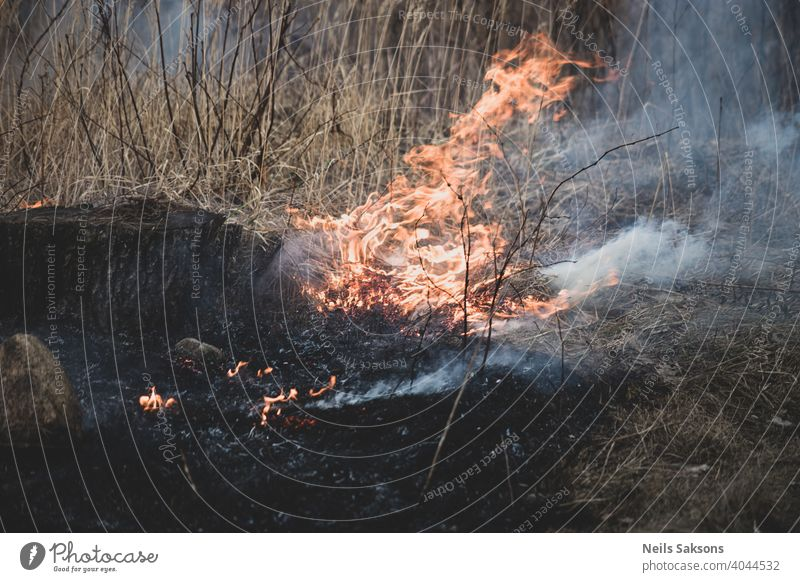 Dry grass burning in the forest and meadows, evening sunset, strong wind air pollution area misdeed cloud damage danger day destroy destruction disaster drought