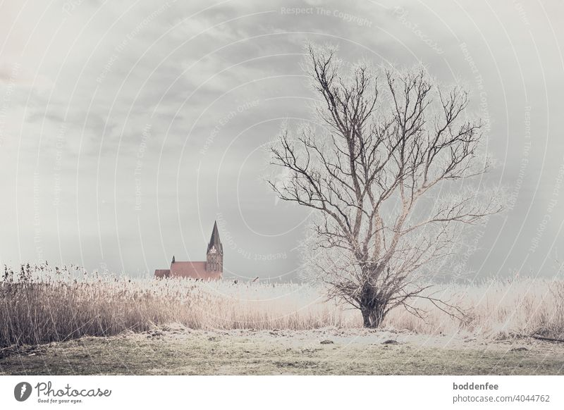 a bare tree at the edge of a reed belt, in the background the roof of a church with the steeple. A cloudy, leaden sky lets light through a gap, which makes the reeds and the tips of the tree's branches glisten.