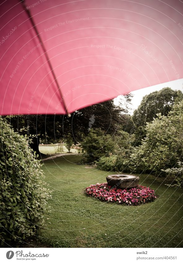 display Garden Environment Nature Landscape Plant Sky Climate Weather Bad weather Rain Looking Beautiful Green Red Flower Fashioned Rose garden Magenta Umbrella