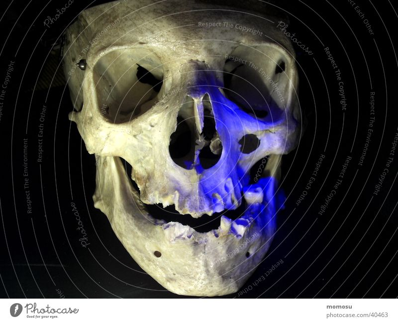 Human being Death Head Mystic Skeleton Death's head