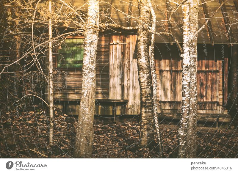 budenzauber Hütte Holzhütte Bude Budenzauber Abendlicht Wald Waldrand Versteck geheimnisvoll Licht Birken Bäume Natur