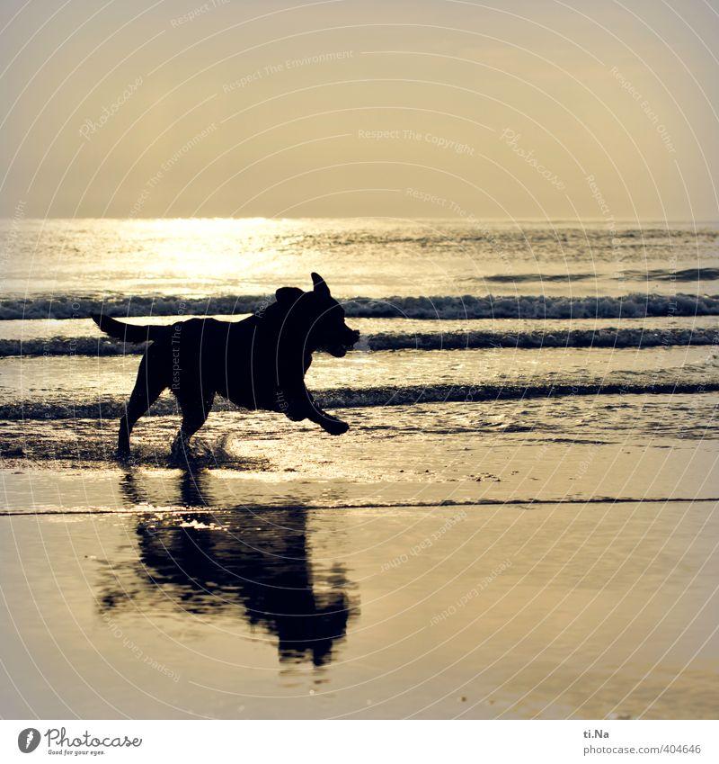 Dog Water Summer Ocean Joy Beach Black Baby animal Playing Coast Gray Swimming & Bathing Jump Waves Gold Walking