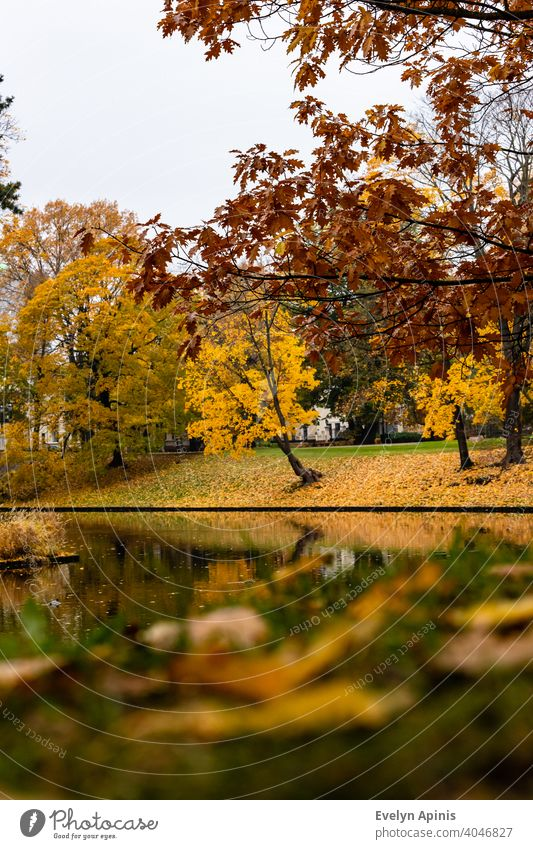 Low angle vertical shot to red oak and yellow maple trees and their colorful reflections in canal water during autumn day at Bastion Hill Park, Riga, Latvia
