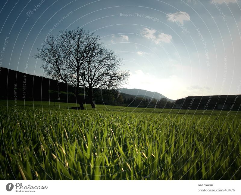 when the grass goes to sleep Tree Meadow Grass Sunset Moody Sky Evening