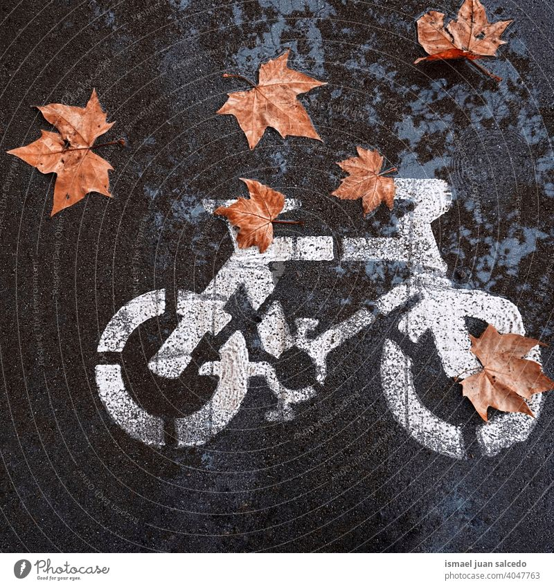 brown leaves on the bicycle road sign on the street puddle water wet reflected reflection traffic signal bike bicycle signal warning city symbol way caution