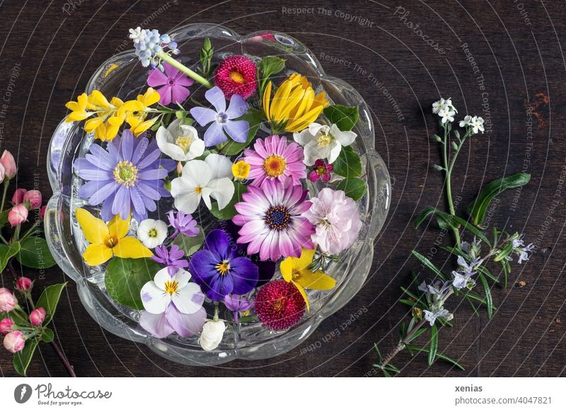 Springlike colourful potpourri with blossoms from the garden floats decoratively and fragrantly in a round glass bowl on a dark wooden background flowers
