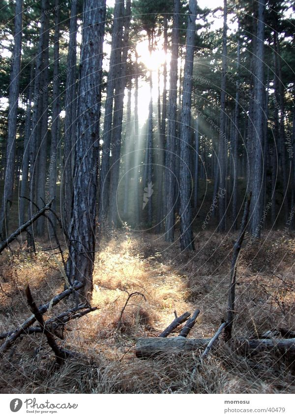 ray of hope Forest Tree Shaft of light Sunbeam Undergrowth Mystic Grass Mountain