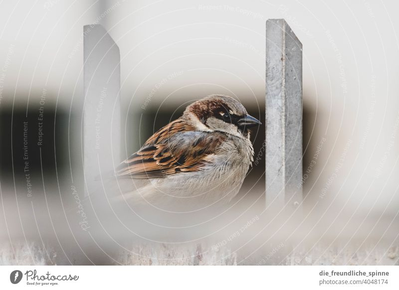 Sparrow on fence Bird Flying Spring Branch Animal Exterior shot Nature Feather Garden Small Close-up Winter Beak Wild pretty animal world songbird Ornithology