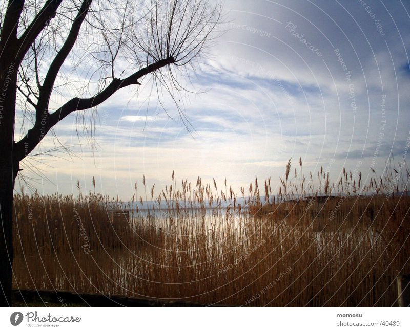 knocking on heavens door Lake Tree Common Reed Sunset Federal State of Burgenland Water Lake Neusiedl