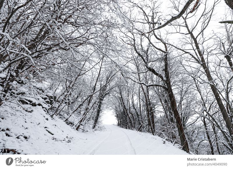 Snow covered road leading to the forest ethereal forest during winter december woods during winter winter season winter scenery snow covered road to the forest
