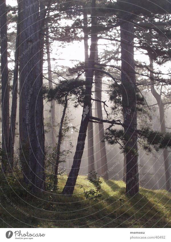 mystic morning Forest Tree Fog Sunrise Morning
