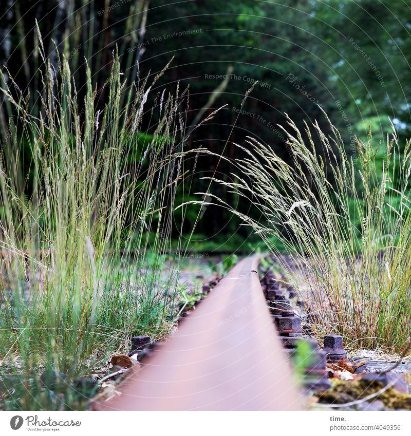 Local history railway tracks Rail transport Metal Grass lost places Past Traffic infrastructure forsake sb./sth. Railroad system Old Structures and shapes