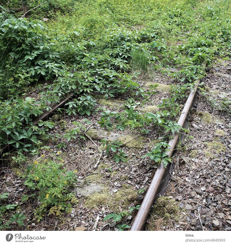 back to the roots | the roots are back rail Rail transport Railroad tracks Track bed Nature overgrown reconquest stones unused Old Historic then wax Growth