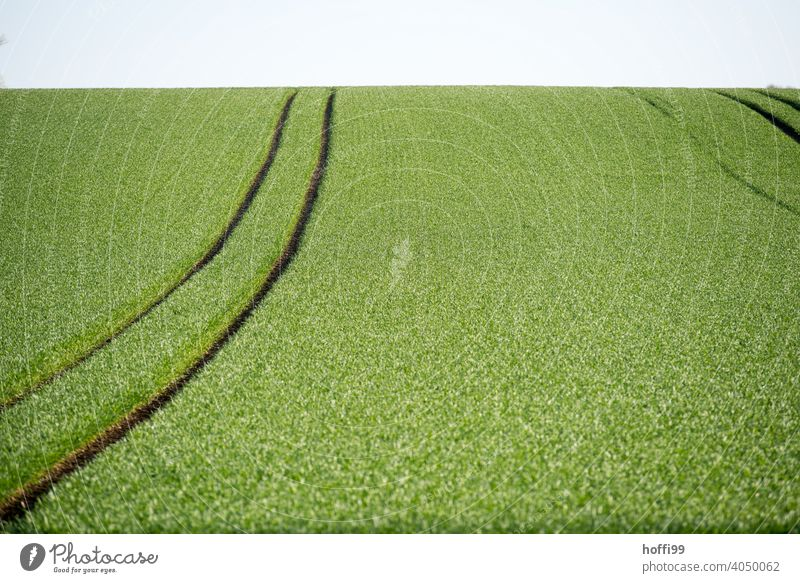 Cereal fields in full spring green Wheatfield Grain Growth Grain field Tractor Tracks Field Environment Habitat die of insects species extinction